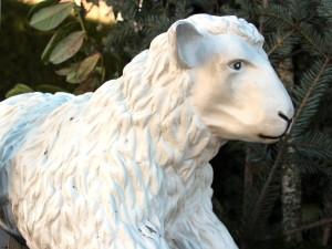 alles vom Schaf